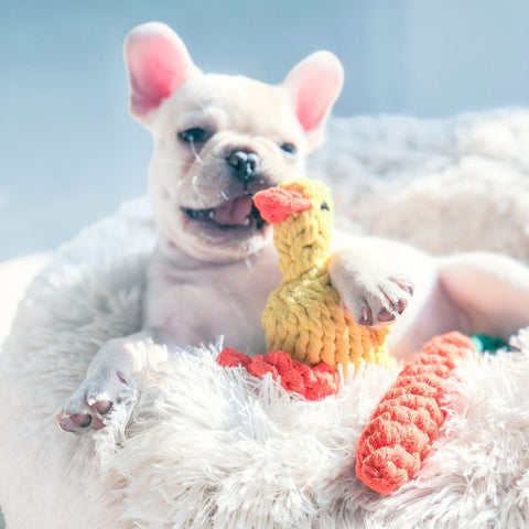 Puppy Frenchie Chewing Rope Toy Duck - Frenchiely