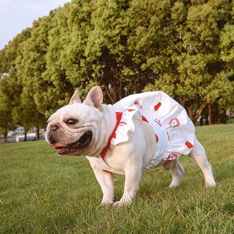 Dog Strawberry Dress Skirt for Medium Dogs