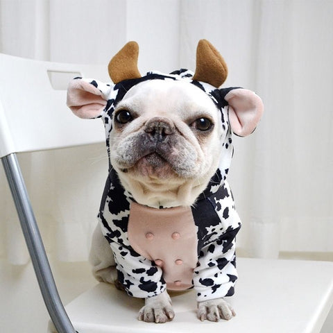 French Bulldog Halloween Cow Costume by Frenchiely