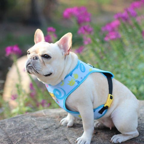 cartoon harness for french bulldogs - Frenchiely