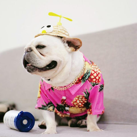 Dog Spinning Straw Hat for French Bulldog - Frenchiely