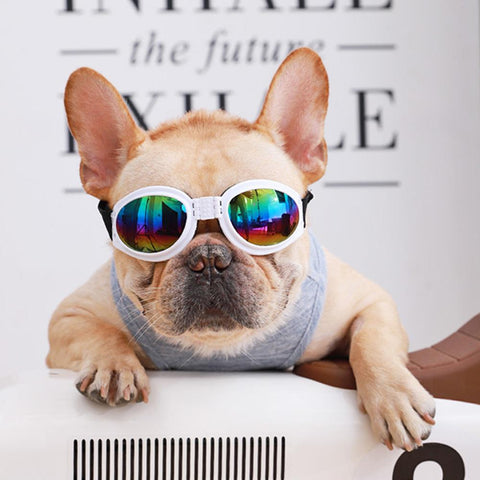 French Bulldog Sunglasses Dog Goggles - Frenchiely