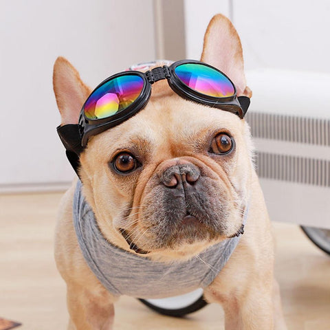 French Bulldog Sunglasses Best Protection for Eyes - Frenchiely