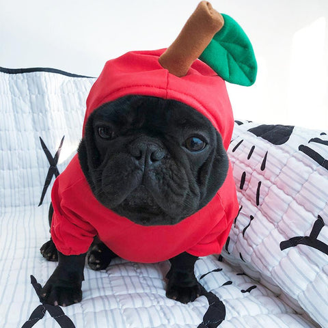 dog apple halloween costumes for french bulldogs - Frenchiely