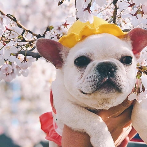Dog Yellow Hat with Flexible String for Medium Dogs - Frenchiely