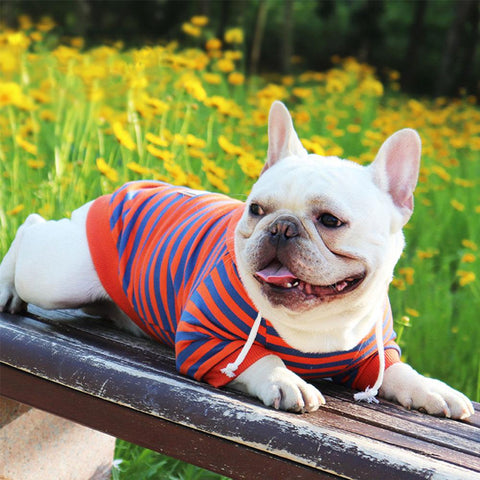 Dog Stripe Sweatshirt Hoodie for French Bulldogs - Frenchiely