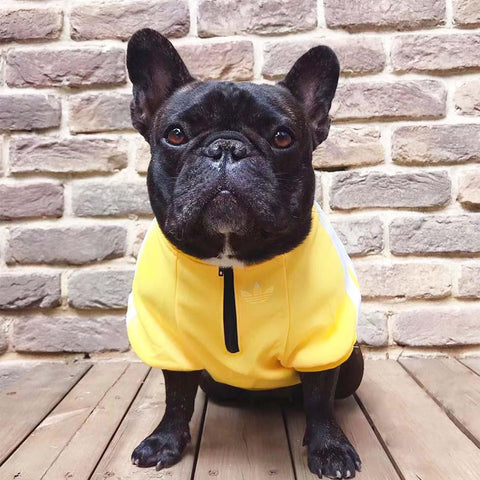 Stylish French Bulldog Zip Up Dog Hoodie - Frenchiely