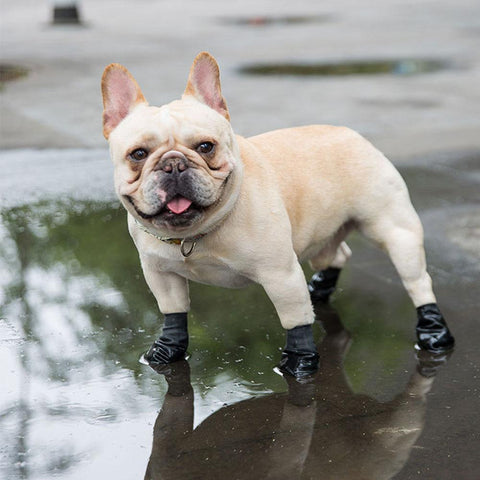 Dog Flexi Waterproof Rain Boots Shoes Set for Medium Dogs - Frenchiely