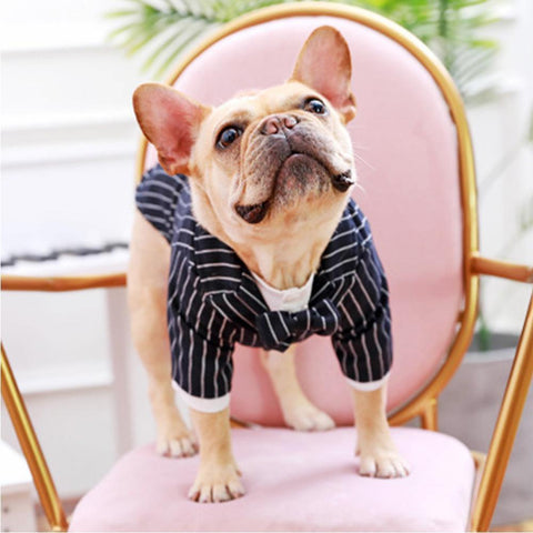 Dog Formal Suit Set with Pants for French Bulldog - Frenchiely