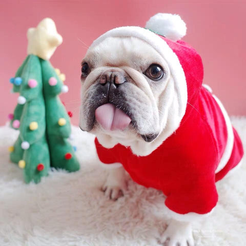 puppy bulldog santa outfit Christmas outfits for medium dogs - Frenchiely