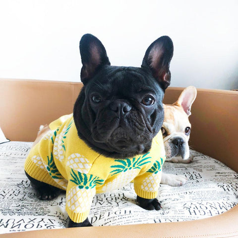Pineapple Pullover American Bulldog Sweaters - Frenchiely