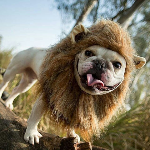 dog halloween lion costume snood