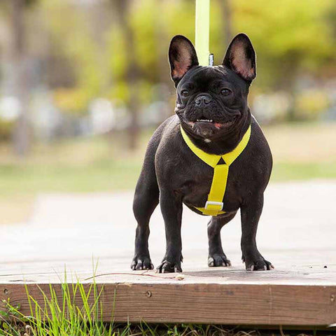 Dog Batman Harness leash set - Frenchiely
