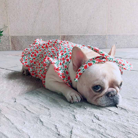 dog retro strawberry dress with headband - Frenchiely
