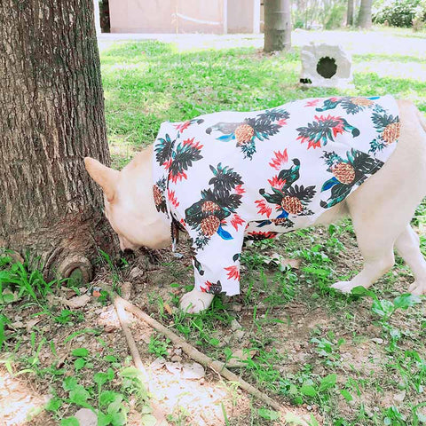 White Hawaiian shirts for French Bulldog - Frenchiely