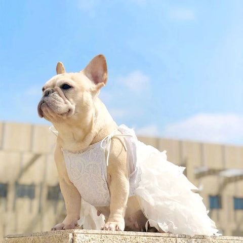French Bulldog Luxury Wedding Dress