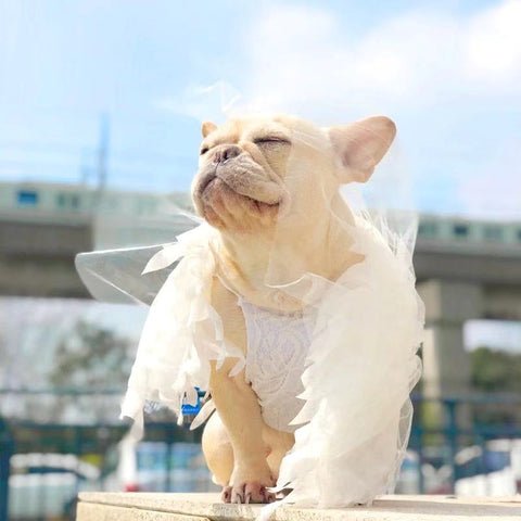 French Bulldog Luxury Wedding Dress - Frenchiely