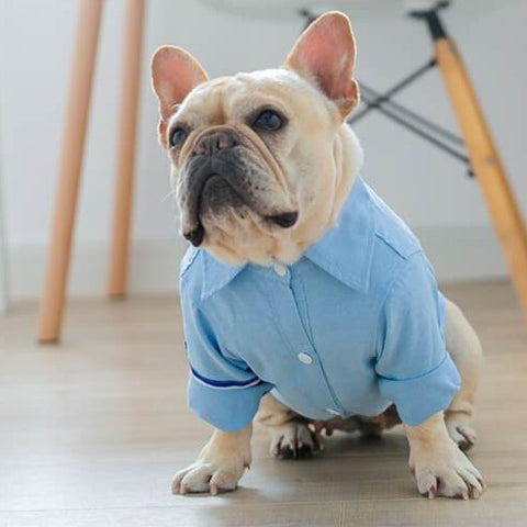 French Bulldog Blue Shirt - Frenchiely