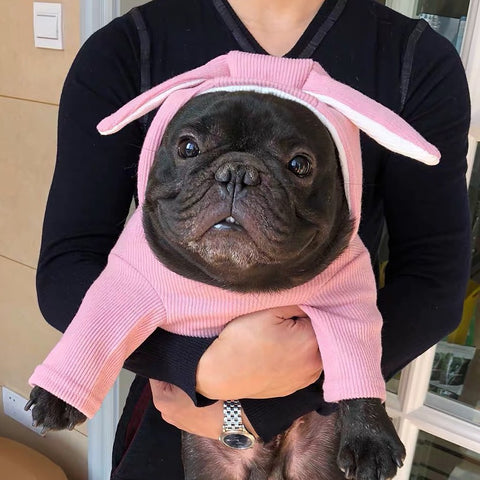 Cute Dog Hooded Sweatshirt with Bunny Ears