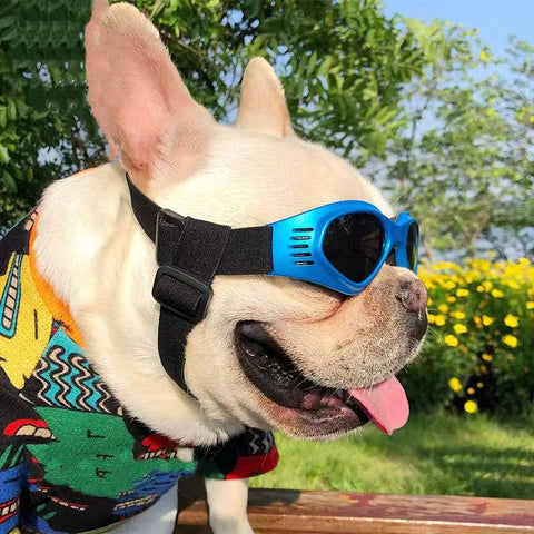 French Bulldog Sunglasses Dog Goggles- Updated Version - Frenchiely