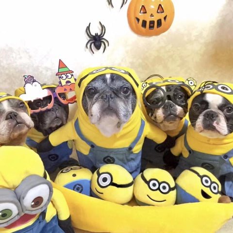 Dog Yellow Minions Costumes - Frenchiely