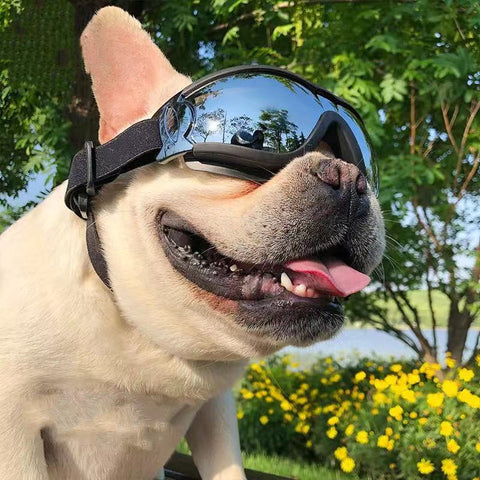 Dog UV Waterproof Dog Goggles - Frenchiely