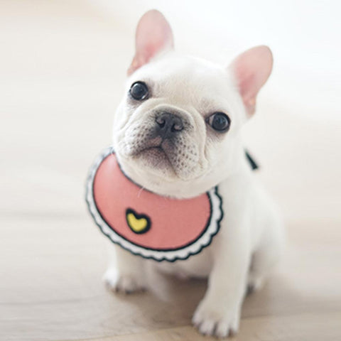 Dog Bandana Spring for French Bulldog - Frenchiely