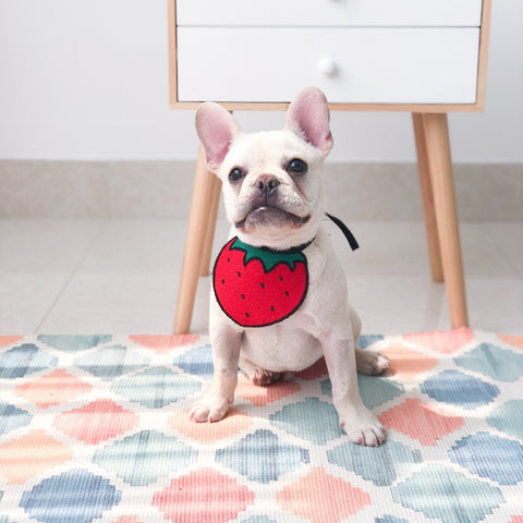 Puppy Scarf Dog Bibs Bandana - Frenchiely