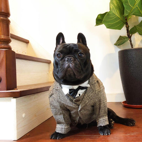 Dog Khaki Formal Suit Coat for French Bulldogs - Frenchiely