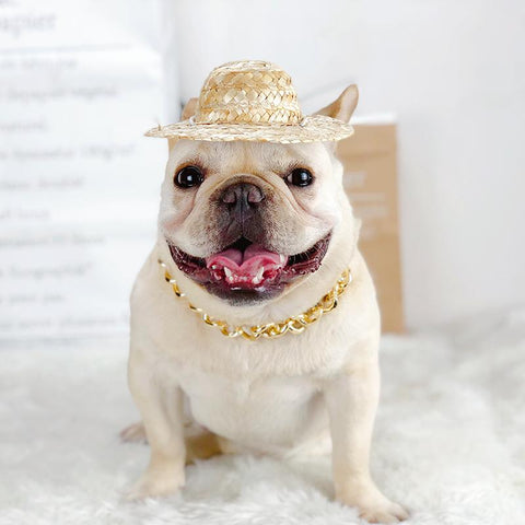 Golden Plastic Dog Chain for French Bulldog - Frenchiely
