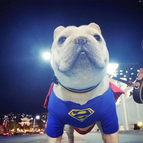 Dog Superman Cosplay Costumes For French Bulldog - Frenchiely