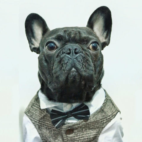 Dog Wedding Khaki Waistcoat Vest for Boy French Bulldogs - Frenchiely
