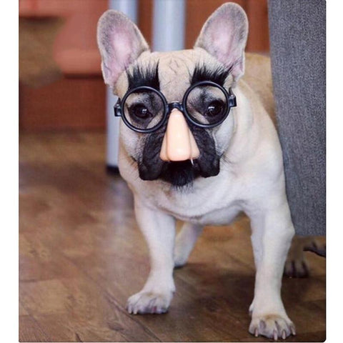 bulldog halloween costumes for dogs nose with glass frame - Frenchiely