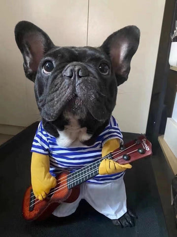 french bulldog costumes dog guitar costume