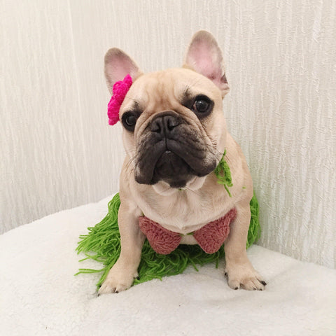 best french bulldog halloween costumes bikini costume - Frenchiely