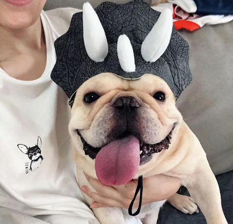Dog Cartoon Dinosaur Hat for Medium Dogs - Frenchiely