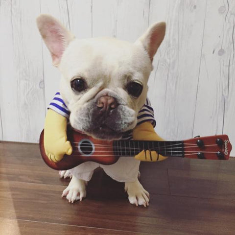 french bulldog costumes dog guitar costume - Frenchiely