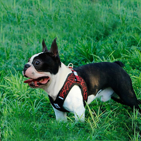 No Pull Mesh Step-in Dog Harness with Reflective Material - Frenchiely