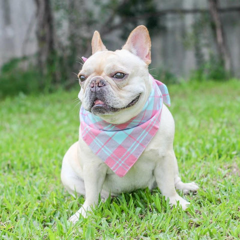 Dog Plaid Bandana Scarf for French Bulldogs - Frenchiely