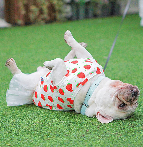 Dog Flexible Strawberry Bubble Skirt Dress for Medium Dogs - Frenchiely