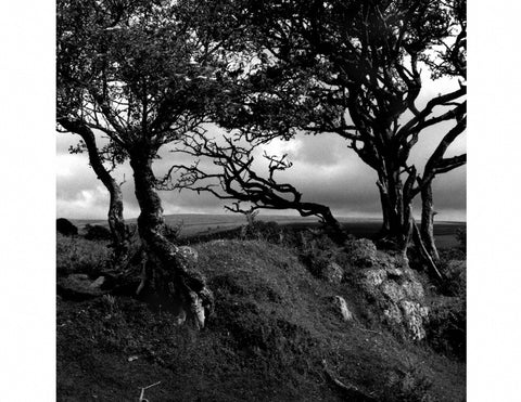 Three Trees, Dartmoor