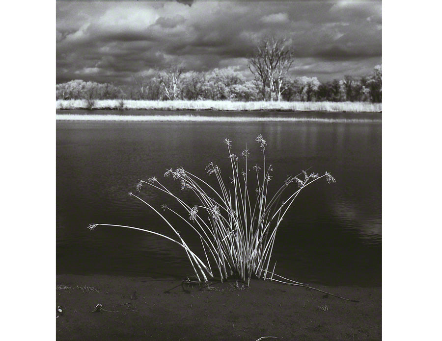 Grasses, Niobrara River