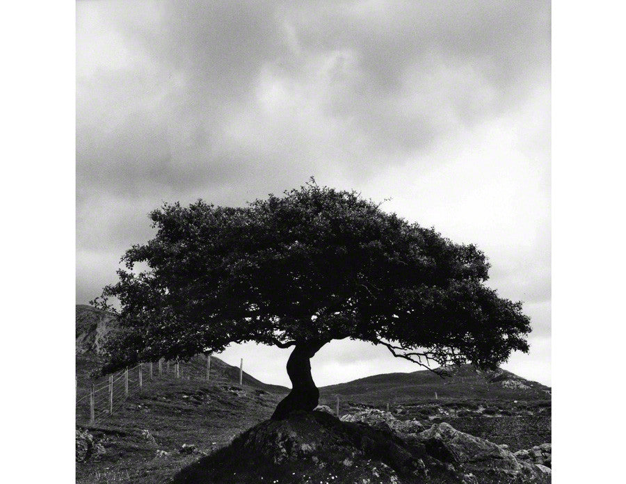 Low Tree, Elgol