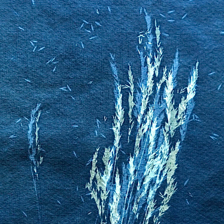 Flora & Fauna Cyanotype Workshop - 6th June 2020