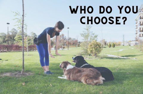 Force free dog trainer training two dogs