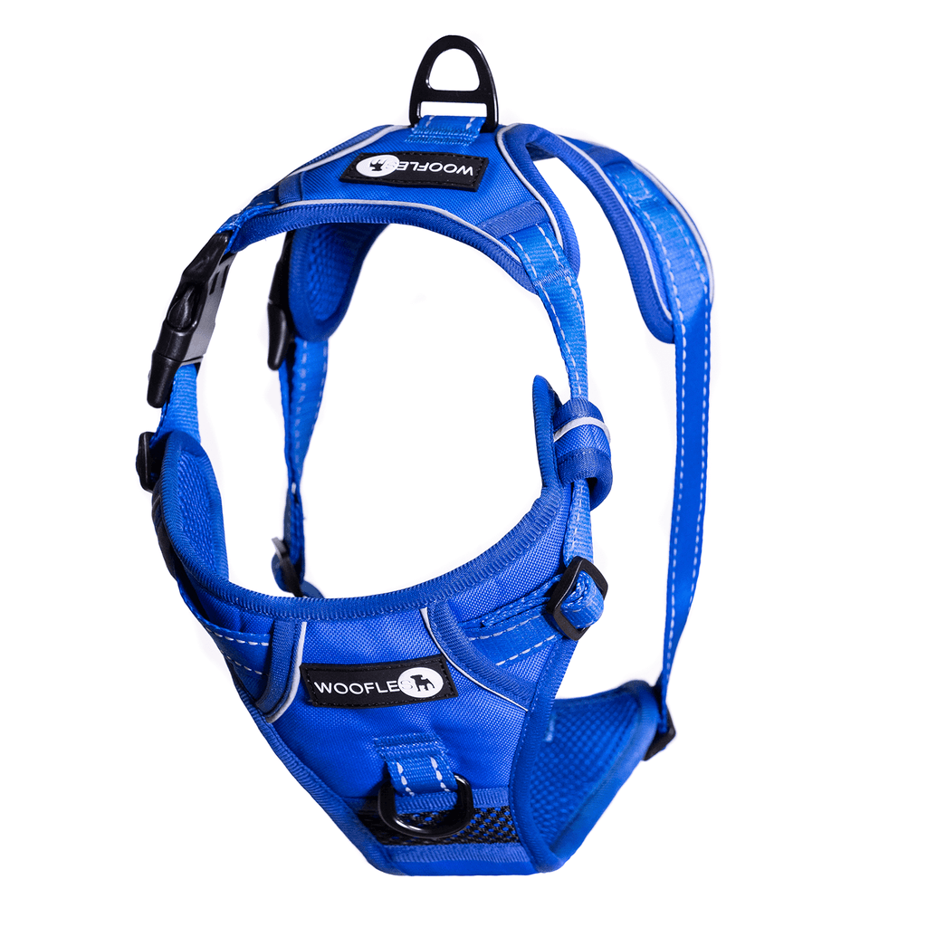 Endurance Harness Blue Hanging