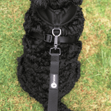 Cockapoo wearing Black Dual AirMesh harness and matching lead