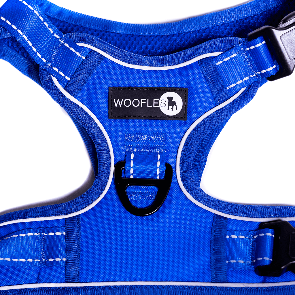 Endurance Harness Blue Front