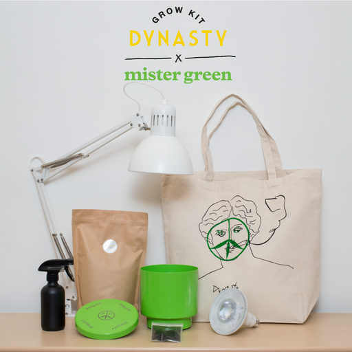 MISTER GREEN X DYNASTY Cannabis Grow Kit Limited Edition