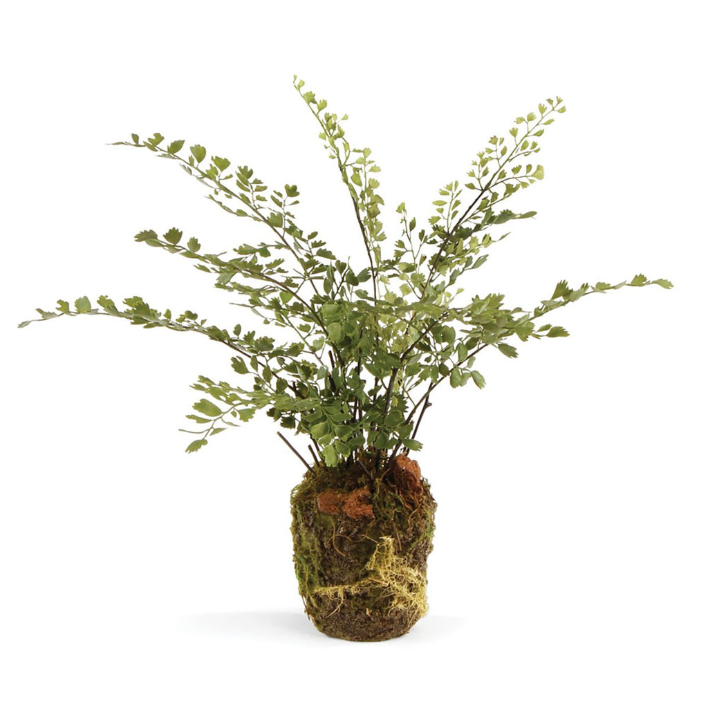 "Maiden Hair Fern 13"" Drop In"